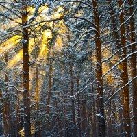Январского солнца лучи золотые :: Виктор Петропавловский