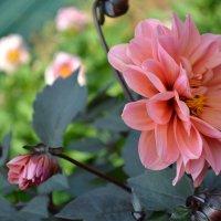 цветок :: Анастасия Федотова