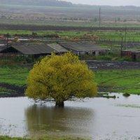 Такая грустная осень :: Виктор Кораблев
