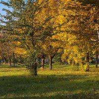Осень рыжая подружка. :: ФотоЛюбка *