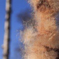Зимний Камыш :: Евгения Беденко