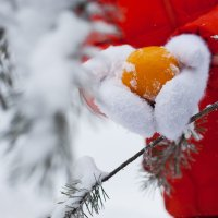 Оранжевая зима :: Марина Тверитнева
