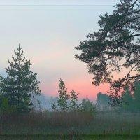 Нежность утра :: Nikita Volkov