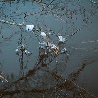 На реке. :: Любовь Анищенко