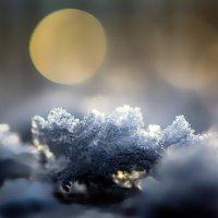 зимние цветы :: Гитас Тумуль