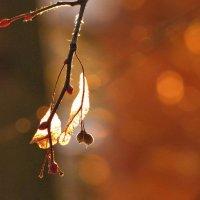 В лучах уходящего солнца :: Марина Морозова