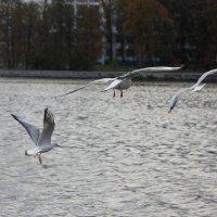 Чайки :: Nina Voyager