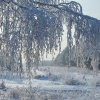 Снежная завеса :: Татьяна Аистова