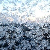 Зимние узоры :: Сергей Тимоновский