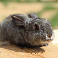 милый кролик :: василиса косовская