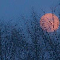Луна на крыше :: Наталья Карышева