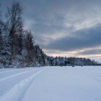 Зимний лес :: Александр Семенов