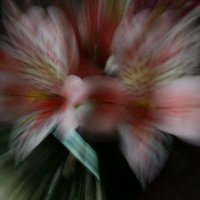 Цветы (четкие движения) :: Антон Маяр