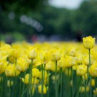 Цветочки :: Алена Шпинатова