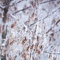 ох зима зима.... :: Екатерина Кравц