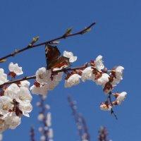 весна :: Ирина Гринченко