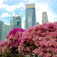 Сингапур :: kirm2 .