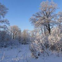 Зимушка - зима! :: Марина Ильина