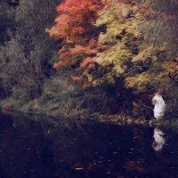 В красках осени. :: Эдуард Сычев
