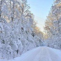Дорогами питерского Деда Мороза 2. :: Виталий Половинко