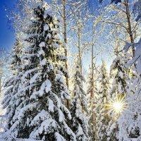 В дебрях дорог питерского Деда Мороза. В ожидании праздника 2. :: Виталий Половинко