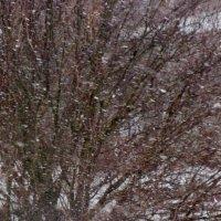 снег :: люба пейчева
