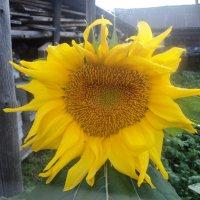 Растения :: Антонида Михайлова