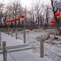 Китайская дорожка :: timka musiienko