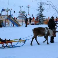 Зимний парк :: Aнна Зарубина