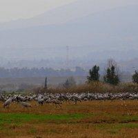 Требуется пастух :: raven owle