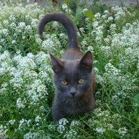 Котёнок Бублик :: Анна Лисавцова