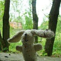 заяц. :: сергей лебедев