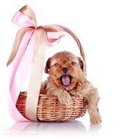 Puppy :: Elya Vatel