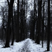 зимняя аллея :: Сергей
