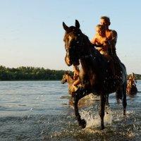 купание лошадей :: Анатолий Еванков