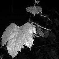 Виноград ночью :: Vika_B