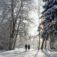 Морозная прогулка :: Юрий Цыплятников