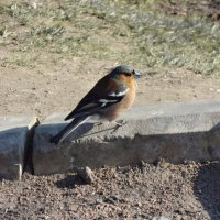 Пташка :: sv.kaschuk