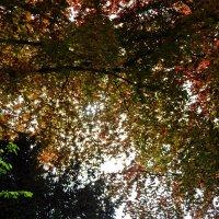 под шатром красивых листьев... :: Александр Корчемный
