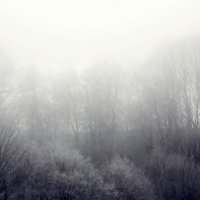 туманное утро :: лиана алексеева