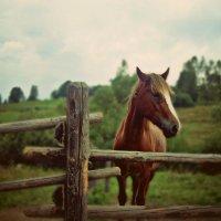 Лошадь :: Настя Настя