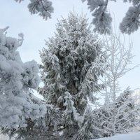 В царстве зимы :: Евгений Никифоров