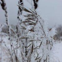 Снег :: Мария Варакина