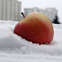 Яблоко на снегу :: Татьяна Симонова