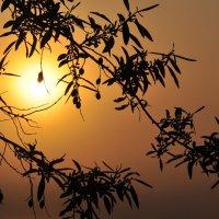 Обнимая Солнце :: дмитрий атаманюк