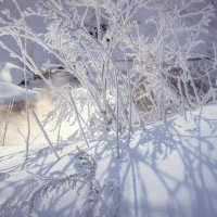 Зима за домом :: Анна Сыслова