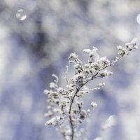 Снежинки :: Татьяна Виноградова