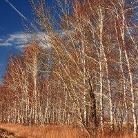 Осенняя :: Александр Коваленко