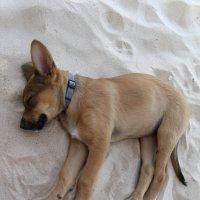 Как сладко спать на песочке :: Наташа Пинская