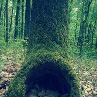 Где-то в лесу :: Юля